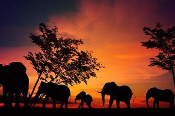 1 Night Serengeti Explorer